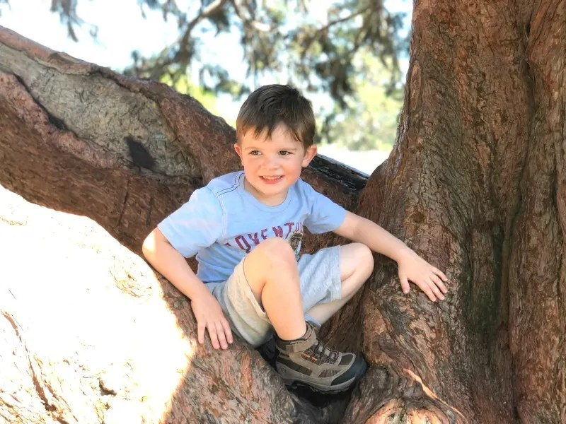Northern California National Parks - Toddler Climbing Tree