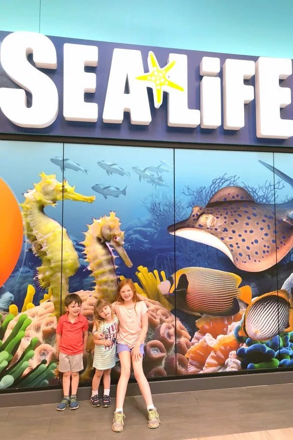 Cabarrus County NC with Kids - Sea Life Charlotte Concord Aquarium