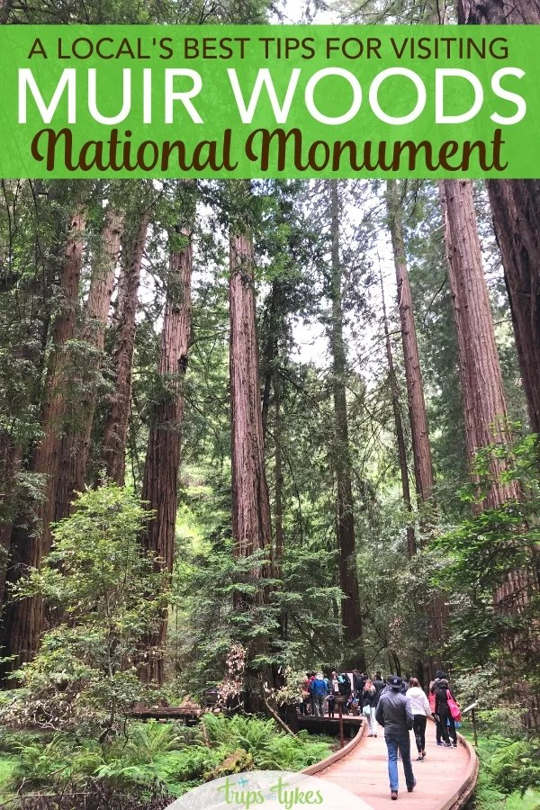 Tips and a local's recommendations for planning a day trip to Muir Woods National Monument from San Francisco. Essential parking reservation details, what to wear, the best hikes, and how to tour with kids. #muirwoods #findyourpark #california #nationalpark