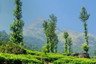 Enchanting Mysore to Wayanad Tour Package - 4 Nights & 5 Days Price & Itinerary