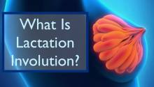What is breast involution? When it is time to wean and finish lactation? Breastfeeding tips for new moms