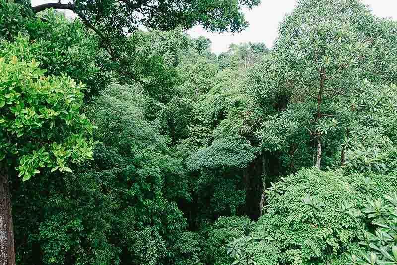treetop-walk-macritchie-singapore-by-febry-fawzi-10