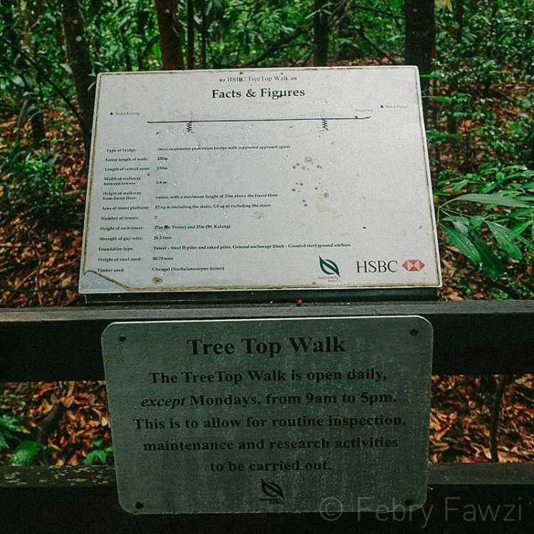 treetop-walk-macritchie-singapore-by-febry-fawzi-8