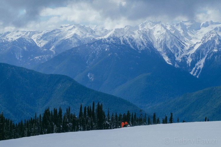 Hurricane Ridge Olympic National Park - by Febry Fawzi-12