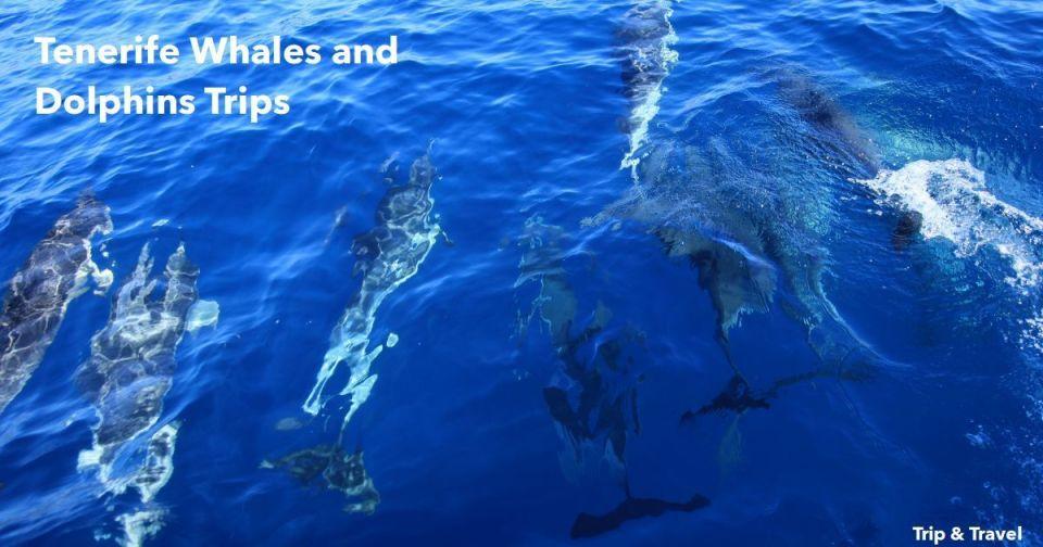 Tenerife, whales and dolphins, trips, watching, boat, ship, sea, Playa de las Américas, Santa Cruz de Tenerife, Canary Islands, Islas Canarias, excursions