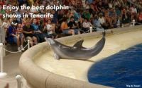 Tenerife Dolphins Show, Canary Islands, Spain, Europe, España, Islas Canarias, car renting, Santa Cruz de Tenerife, tickets, alquiler de coches, whales and dolphins