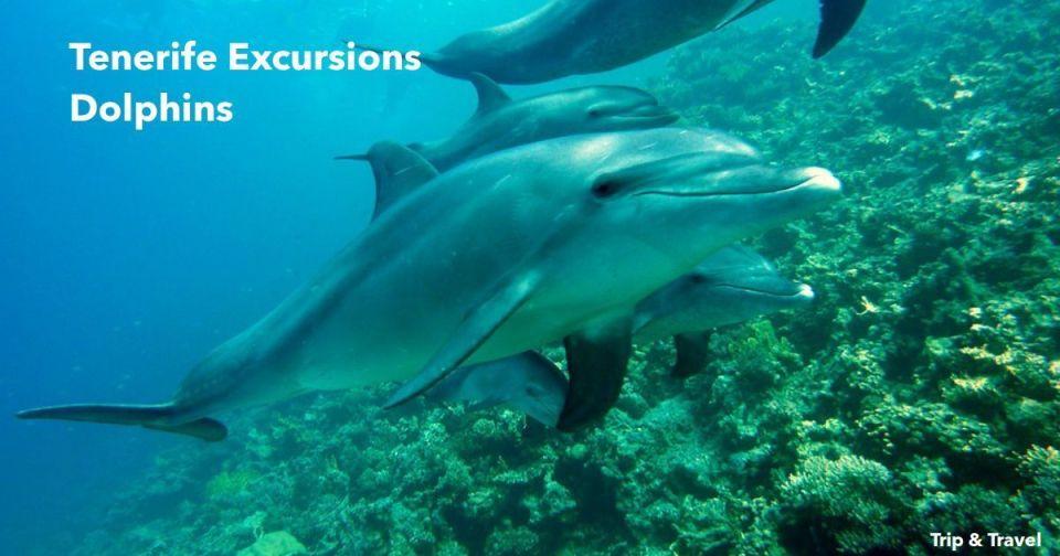 Tenerife Excursions Dolphins, Canary Islands, hotels, Islas Canarias, hoteles, Spain, España, delfines, ballenas, excursiones, car renting, organized groups, alojamiento