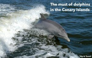 Tenerife Excursions Dolphins, hotels, Canary Islands, hoteles, Islas Canarias, Spain, España, grupos organizados, organized groups, alojamiento, delfines, ballenas