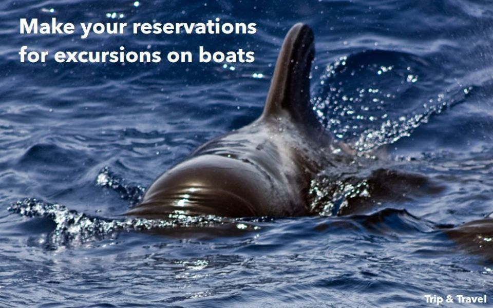 Tenerife Whales and Dolphins Watching, hotels, hoteles, excursions, Canary Islands, Islas Canarias, España, Spain, reservations, sea, organized groups, delfines, ballenas