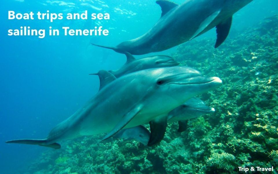 Excursions in Tenerife, tickets, reservations, hotels, holidays, restaurants, Canary Islands, Spain, dolphins show, whales watching, Islas Canarias, España, car renting