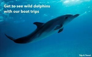 Excursions Playa de las Américas, Canary Islands, Spain, hotels, car renting, restaurants, boat trips, dolphins show, whales watching, Tenerife, España, alojamiento, holidays
