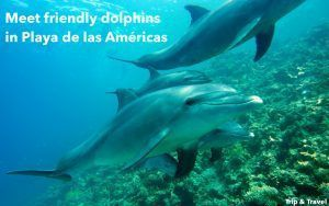 Excursions Playa de las Américas, reservations, tickets, hotels, Canary Islands, Spain, dolphins shows, whales watching, restaurants, car renting, boat trip, Tenerife, holidays