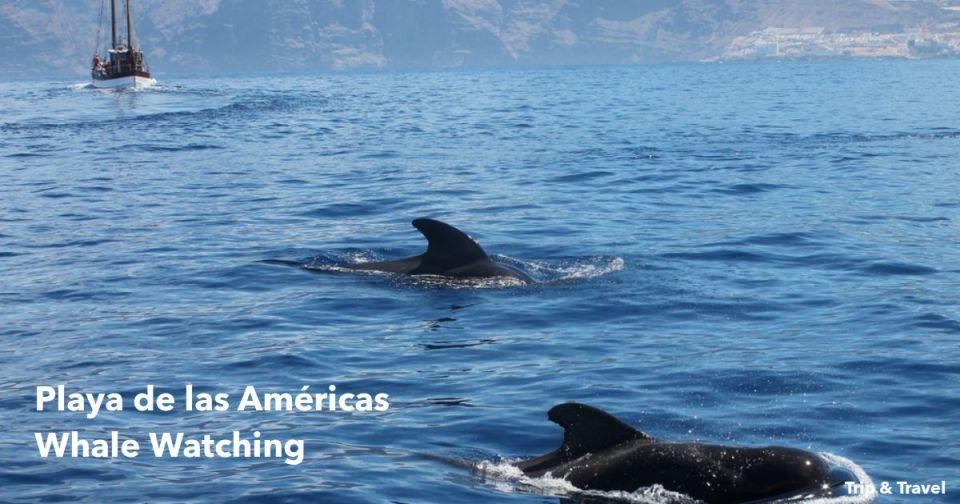 Playa de las Américas Whale Watching, excursions, trips, tours, cheap, hotels, reservations, restaurants, Puerto Colón, Tenerife, Puerto de la Cruz, tickets, events