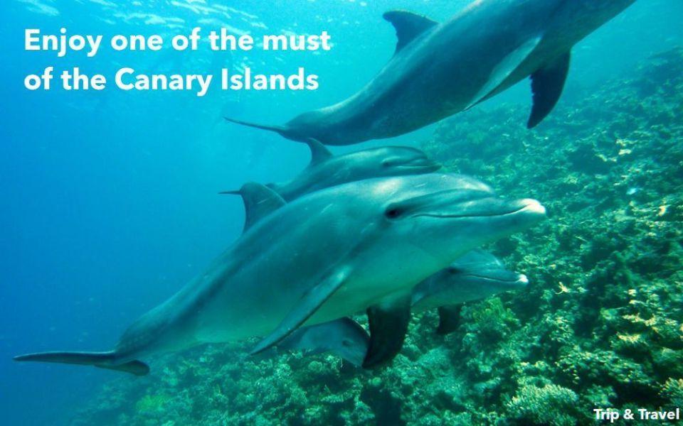 Playa de las Américas Whales and Dolphins Watching, reservations, hotels, car renting, Canary Islands, Tenerife, Spain, España, alojamiento, Islas Canarias, sea