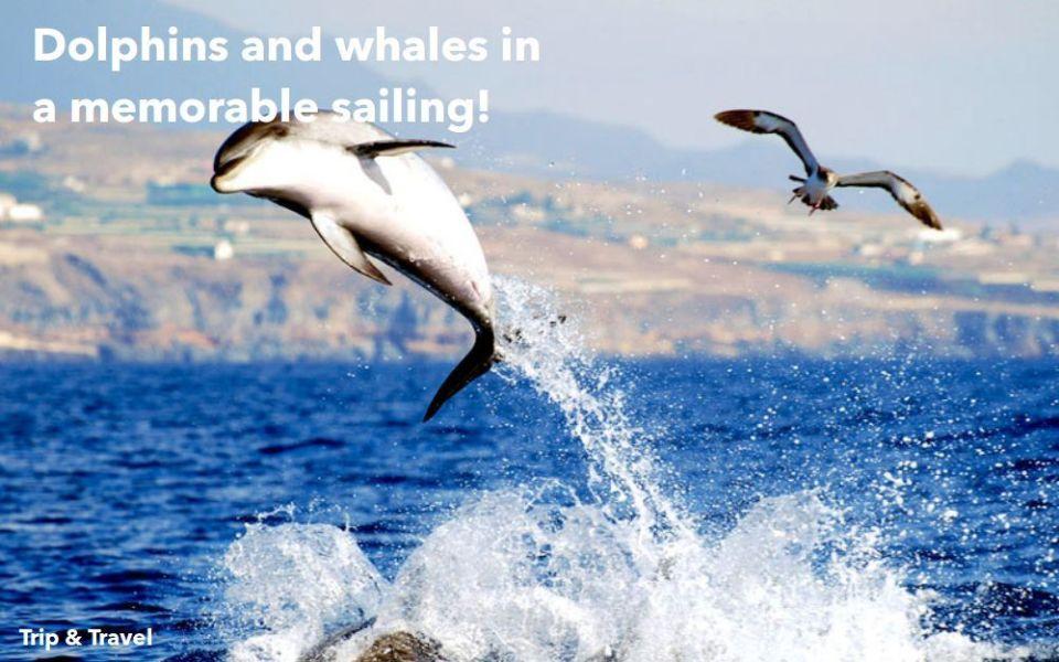 Tenerife Dolphins and Whales, hotels, trips, tours, excursions, cheap, reservations, restaurants, tickets, events, Playa de las Américas, Puerto Colón, Puerto de la Cruz