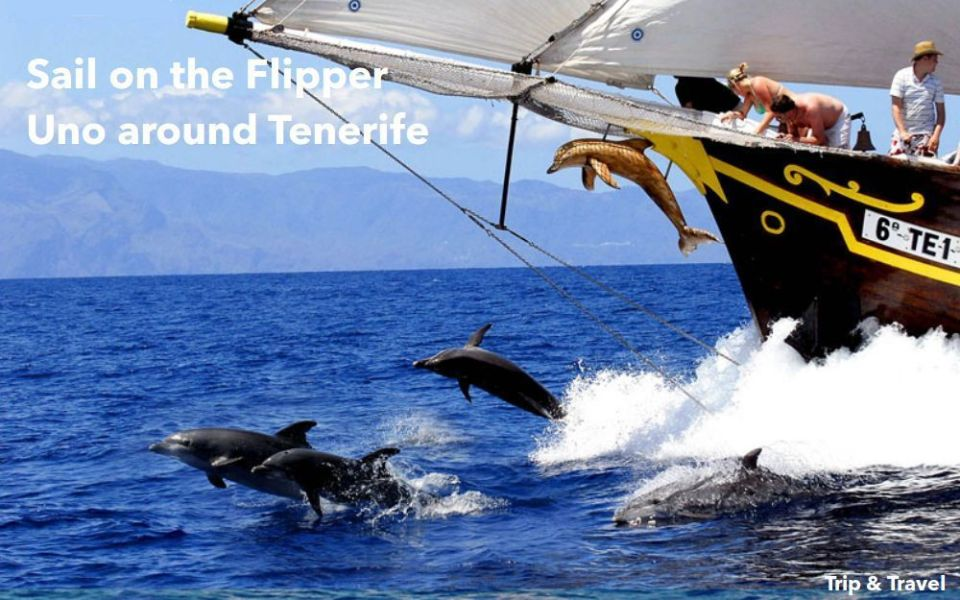 Tenerife Excursions Los Gigantes, reservations, holidays, hotels, tickets, boat trip, dolphins watching, whales watching, Canary Islands, Spain, España, Islas Canarias