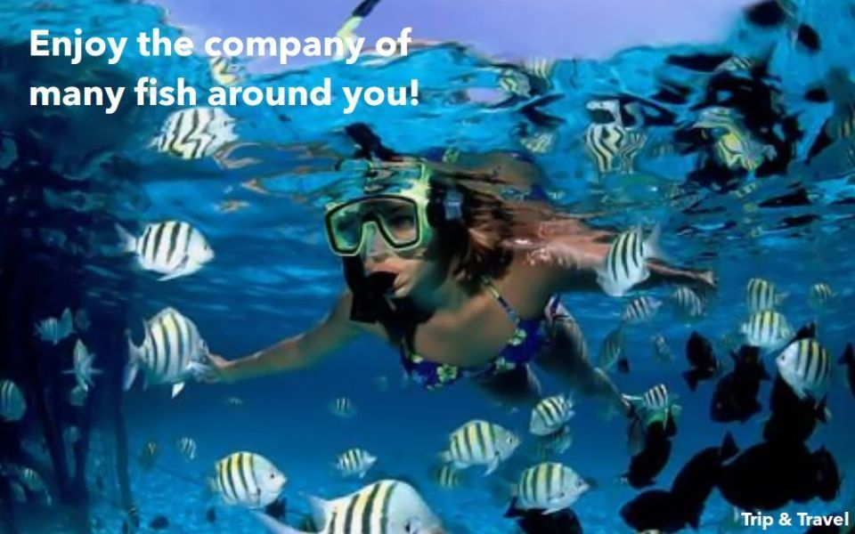 Tenerife Excursions Snorkeling, tickets, reservations, restaurants, hotels, Canary Islands, Spain, whales watching, scuba diving, jetski, zealot boats, parascending