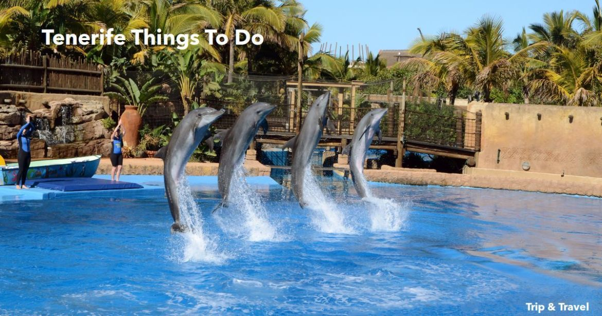 Playa de las Américas Things To Do, Tenerife, cheap, tickets, events, reservations, restaurants, hotels, excursions, dolphins show, attractions, Puerto Colón, Spain