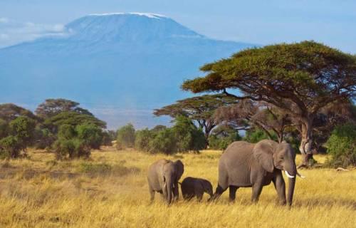 Natuuroverzicht in Kurgerpark - Zuid Afrika