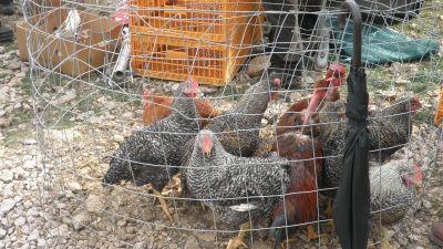 """Zbog smanjenja uzgoja svinja, goveda i peradi ne """"gine"""" nam još veći uvoz hrane"""