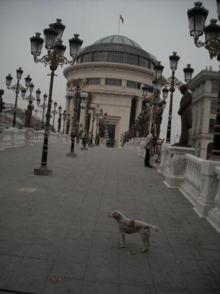 Jedan pas i deseci kipova