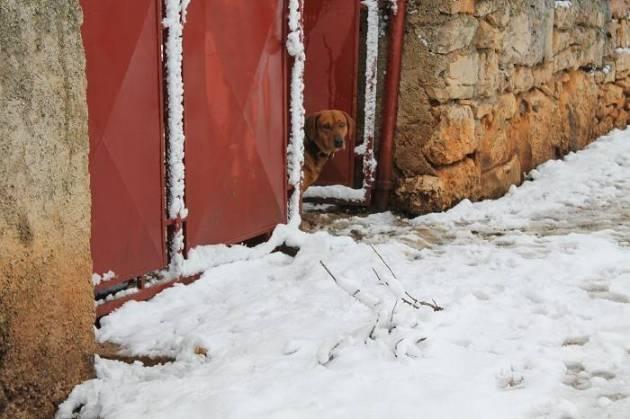 Miljevci u srijedu prijepodne: Ni pas se ne usudi izaći na ulicu (Foto: Hrvoslav Pavić)