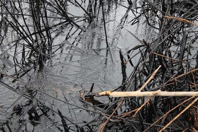 Ekološka katastrofa u Kninu 043