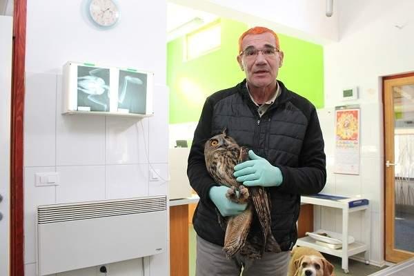 Sova ušara oporavlja se u Sokolarskom centru u Dubravi (Foto Hrvoslav Pavić) (12)