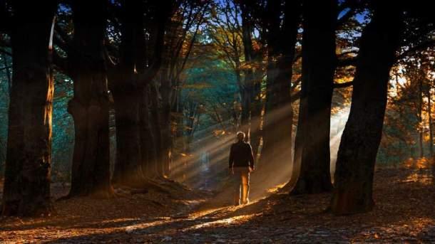 Šetnja po šumi: autor fotografije Hans Tibben