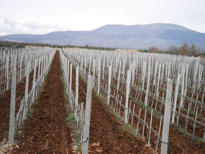 Hrvatsku vinsku industriju ugrožavaju jeftina uvozna vina