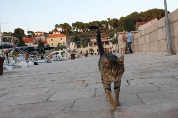 Kreativni dani Fausta Vrančića - mačka na rivi (Foto: Hrvoslav Pavić)