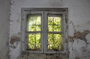 Podrumski prozor zarastao u korov