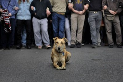 Na Bundeku 'Dan prijateljstva ljudi i pasa', u Šibeniku prosvjedna šetnja