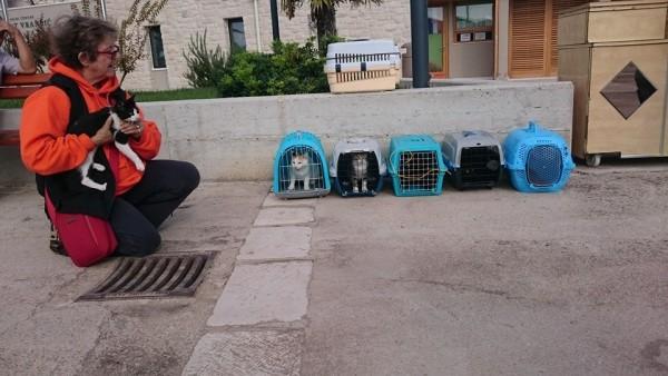 Mačja ekskurzija na putu za Šibenik pod budnim okom Vesne Kesić
