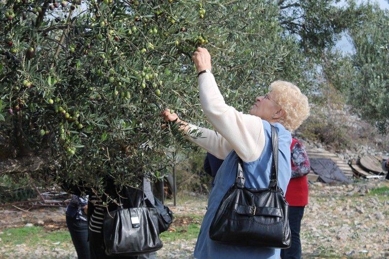 NP Krka poziva na 3. susret maslinara i vinogradara