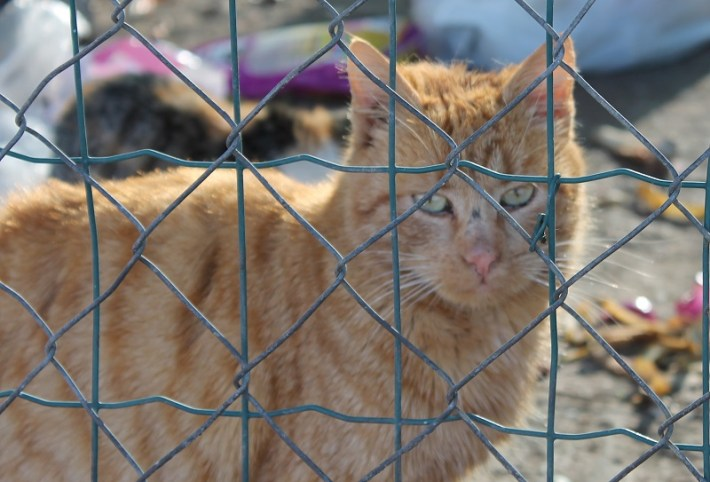 Mačke (Fotoo Tris - H. Pavić) (1)
