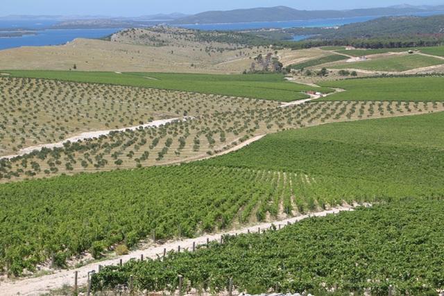 Jadrtovački vinogradi (u projektu navodnjavanja) kompjuterski se prate i snimaju termo-kamerom