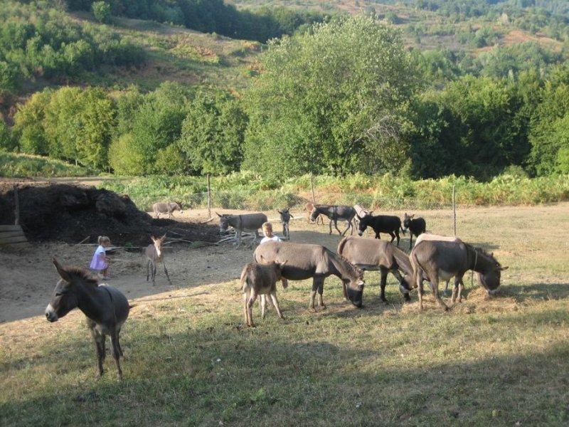 """Čak 108 tisuća stanovnika EU """"kliknulo"""" ZA očuvanje prirode, održivost sadašnjih zakona…"""