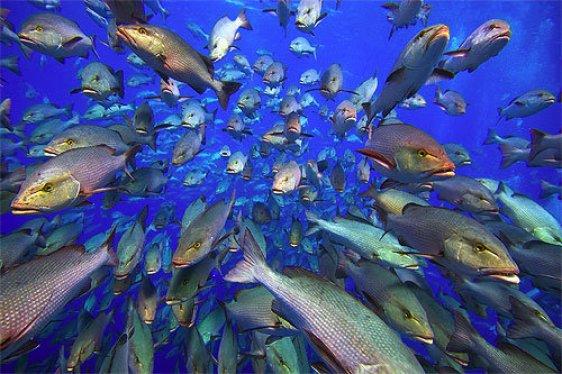 Ribe ne mogu pobjeći od ljudskog bezumlja