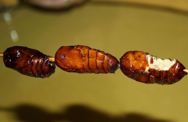 Svilene bube na ražnju, kako ih spremaju u Kini (foto Wikipedia)