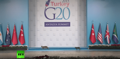 Mačke na summitu G20 (screenshot)