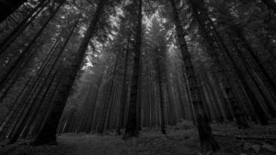 Može li gluplje: Makedonija Makedoncima zabranila dnevnu šetnju po šumama – kazne do 2000 eura!?