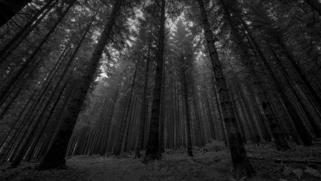 dark-forest-21458