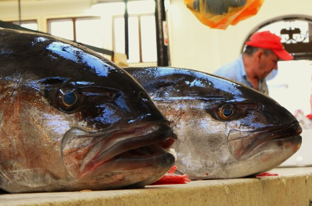 Dvije ribe na splitskoj ribarnici (foto TRIS/G. Šimac)
