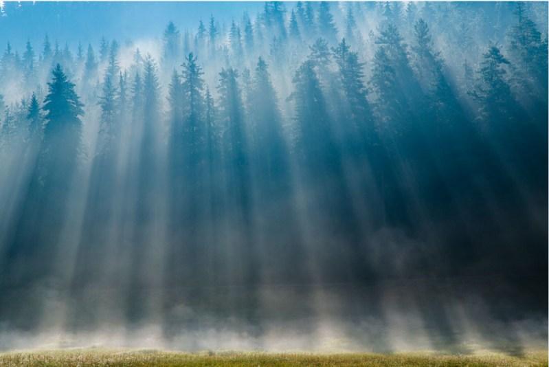 WWF: Zaštita prirode ne smije biti samo na papiru