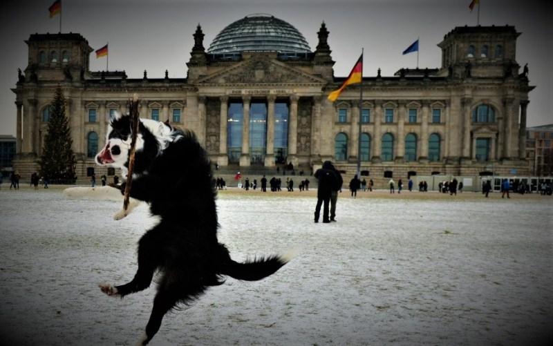 Ilustracija: Pas veselo skače u Berlinu kod Reichstaga