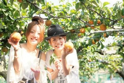 Ilustracija: Japanci čak plaćaju da bi brali voće u voćnjacima Kanto - foto: Fast Japan