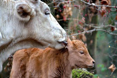 Foto: Prijatelji životinja