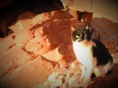 Još jedna maca (foto TRIS/G. ŠIMAC)