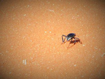 Život u pustinji (foto TRIS/G. ŠIMAC)